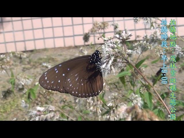 <html> <body> Film for Purple Butterfly2019-11-12 </body> </html>