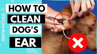 How to Clean Your Dog's Ear in 5 Simple Steps || Avoid ear infection in dogs ll