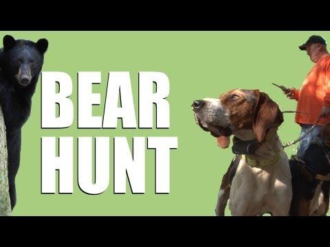 Californian black bear hunt