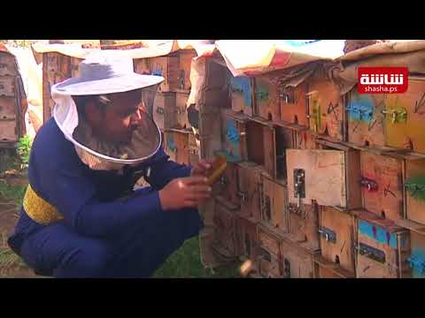 تربية النحل في اليمن أصبحت مهنة خطرة بسبب الحرب