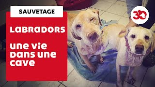 Ces Labradors Ont été Sauvés D'une Cave Par La Fondation 30 Millions D'Amis