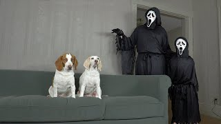 Dogs vs Little vs Big Ghostface Prank: Funny Dogs Maymo & Potpie Make BIG MESS w/Ghostface Killer