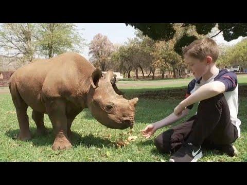العرب اليوم - طفل صغير يتكفَّل بمُهمِّة حماية صغار حيوان وحيد القرن