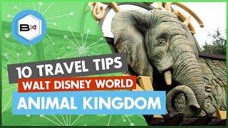 Top 10 Tips Visiting Disney's Animal Kingdom at Walt Disney World