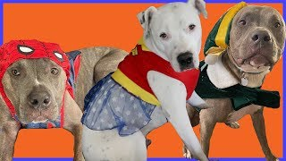 Choose My Dogs Halloween Costumes!