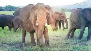 preview picture of video 'Taking our kids on safari in the Serengeti, Tanzania. Watching the elephants.'