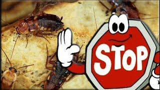 Убойная сила приманка от тараканов 8шт
