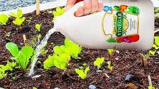 Usa vinagres con tus plantas y sucederá esto