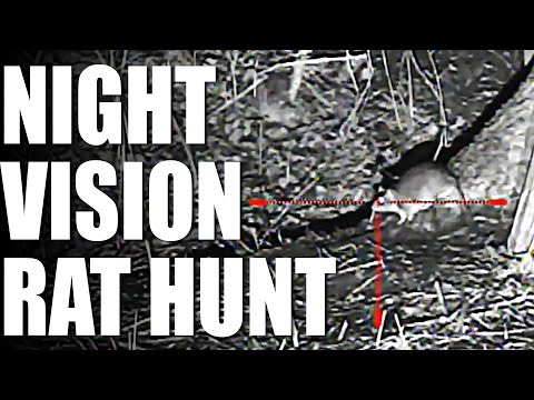 Night Vision Rat Hunt