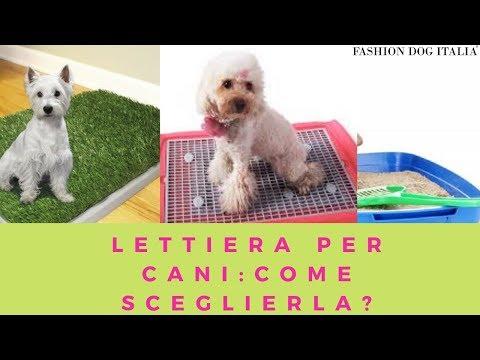 Lettiera per cani: come sceglierla!