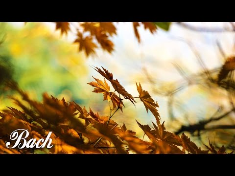 Bach - Air on the G String | 1 HOUR Extended | Classical Music for Studying and Concentration Violin