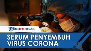 Obat Virus Corona Dicetuskan, Pejabat Kesehatan China Minta Plasma Darah Orang Sembuh dari COVID-19