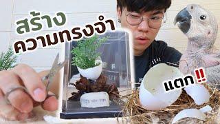 DIY ความทรงจำ… จากเปลือกไข่นกแก้วที่ฟักเอง!!