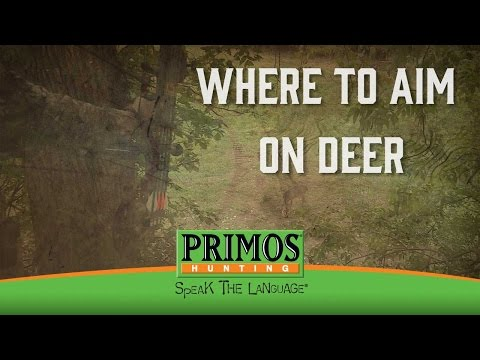 Where to Aim on a Deer video thumbnail
