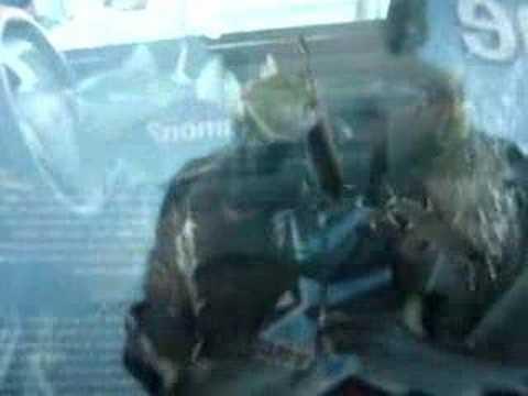 Videos of Cars Converted Into Aquariums