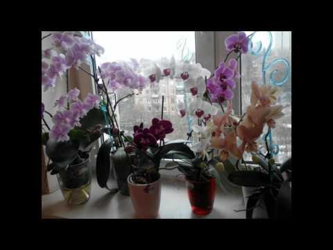 Почему орхидею НЕЛЬЗЯ ДЕРЖАТЬ ДОМА. Комнатные растения по ФЕН-ШУЙ