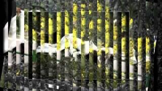 Video Ru Em Từng Ngón Xuân Nồng Quang Dũng
