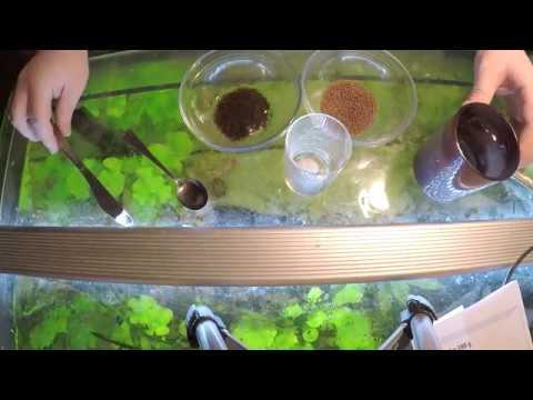 Squamous papilloma hpv