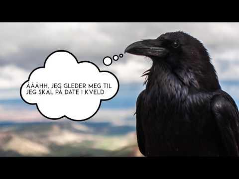 Dyrenes indre liv, video
