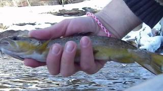 Wild Wisconsin River Brown Trout in HD C'n'R