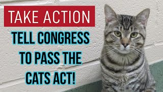Take Action to Save Cats from Government Testing! (BIG UPDATE!)