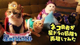 猫の日【星ドラ】ネコ勇者たちが冒険してみた [猫動画] | Kholo.pk