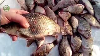 Зимняя Рыбалка в северном Казахстане из Астаны обзор 57 за февраль начало марта 2018   GGG KaiSer TV