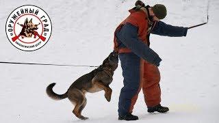 Дрессировка по защите, НО Зена / Защита, охрана, нападение