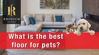 What is the best floor for pets? : Best Flooring for Dogs : Flooring Tutorials by Rhodium Floors