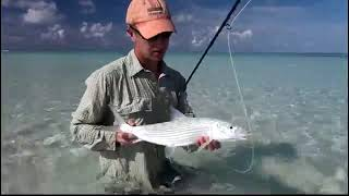 Fly Fishing the Maldives