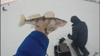 Рыбалка на реке свияга в ульяновске приманка снасть наживка
