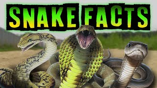 Snake Facts!