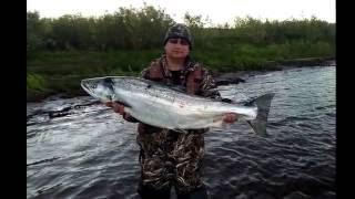 Ловля красной рыбы в мурманской области