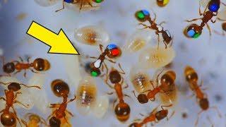 Ленивые Муравьи! Что если покрасить муравьев и проследить за ними? Разноцветные муравьи.