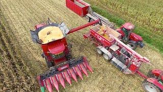 Making Corn Cob Mix | CASE IH 8240 Axial Flow / DEWA maalmolen | Bart Sprangers - Mais dorsen