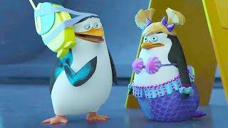 DreamWorks Madagascar em Português | Operação Flash | Os Pinguins de Madagascar | Desenhos Animados