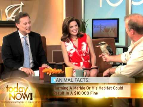 Ornitolog upozorňuje na ohrožený druh ptáka