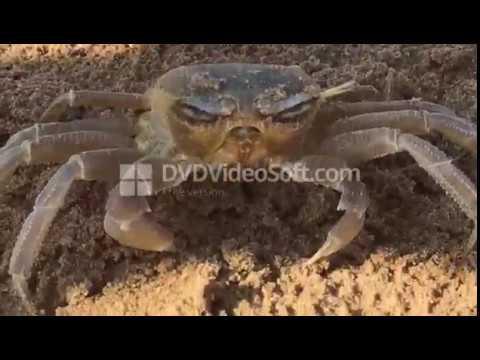 Parassita di 18 anidub - Larve di grandi vermi