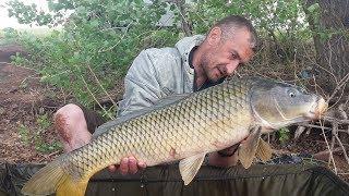 Рыбалка на Сазана! 8 Трофейных сазанов.