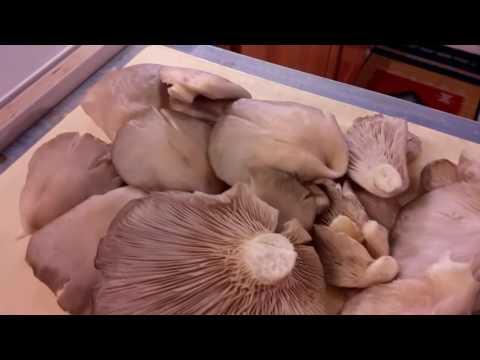 Che trattare un fungo su una fotografia passano il dito