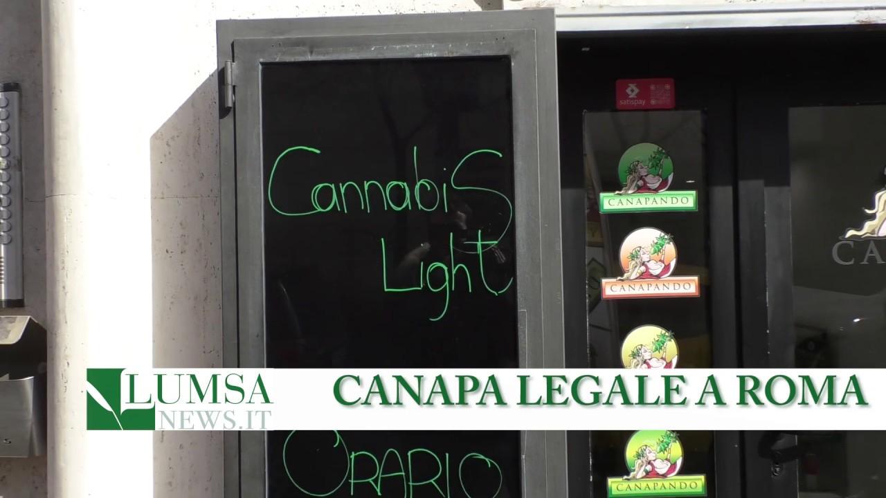 Roma prima città d'Italia per numero di Grow Shop