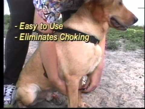 HQ Yuppie Puppy Commercial.wmv