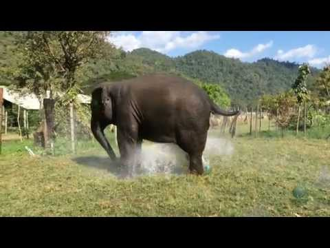 A Massive Elephant Decides to Break the Sprinkler System