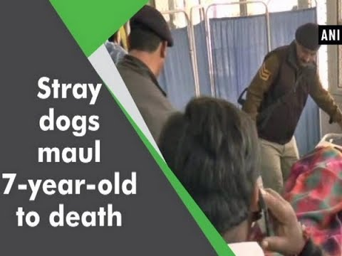 Stray dogs maul 7-year-old to death