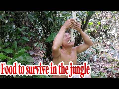 Survival in the forest (ep 31): The Solitary fishtail palm is a great food to survive in the forest