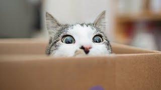 Почему кошки любят коробки ?