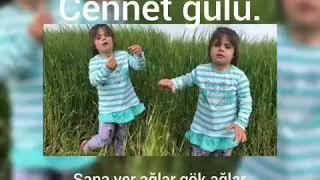 Oy Oy Feleke
