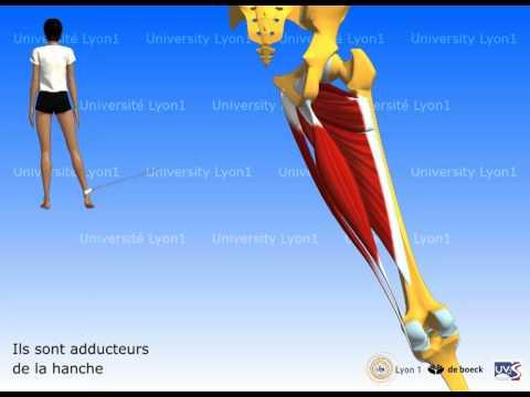 Acidifier les muscles