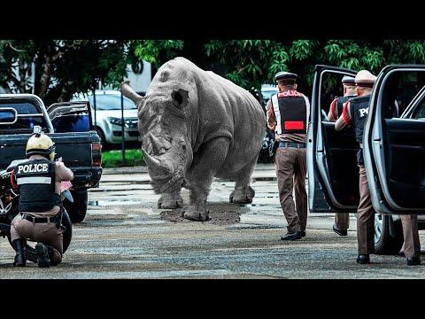 Animaux sauvages qui se sont échappés d'un Zoo F