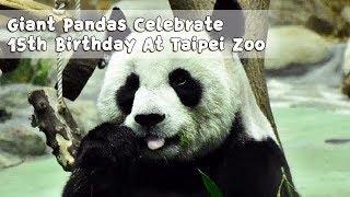 Giant Pandas Yuan Yuan, Tuan Tuan Celebrate 15th Birthday At Taipei Zoo (Credit: ETtoday) | IPanda